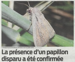 2019-08-12-La-prsence-d-un-papillon-disparu-a-t-confirmee-TO-SO-250px